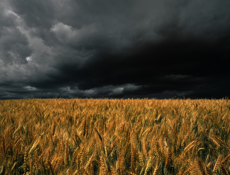 The sun lights a wheatfield while a storm approaches nearby.